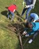 Die Schüler*innen sammeln Äste für die neuen Hochbeete.